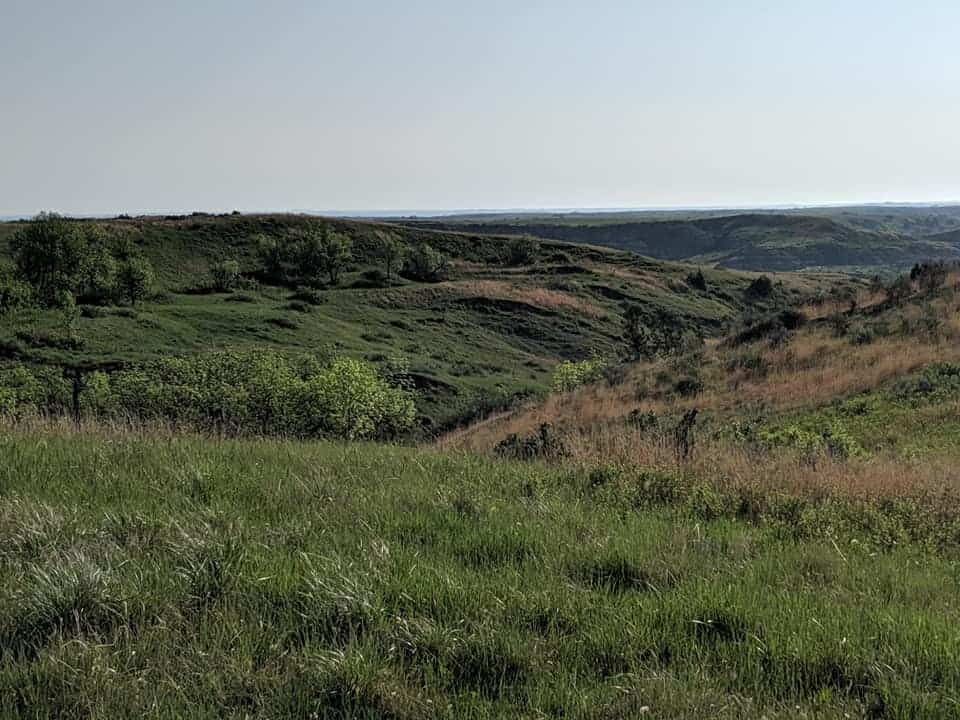Prairie scene with rolling hills. You can see trees sporadically on the hills and some patches of the prairie are brown instead of green like most of the grasses.