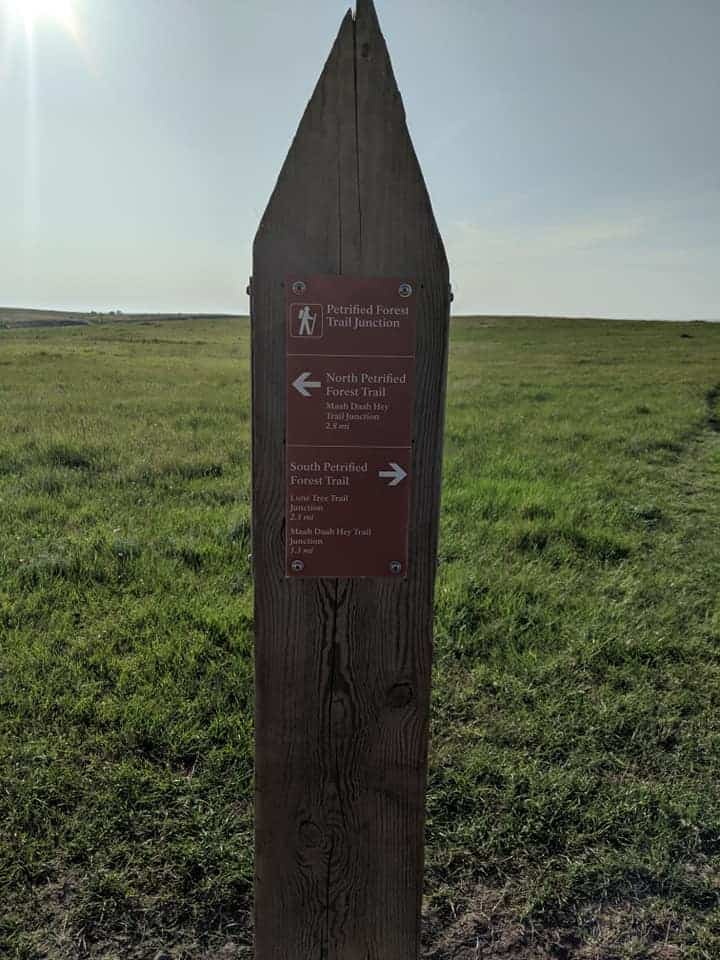 a single pointed post surrounded by prairie. There is a sign on the post stating that this is the Petrified Forest Trail Junction. There is an arrow pointed to the left for the North Trail and an arrow pointed right for the South Trial.